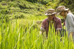 The researchers in one of the 12 regional research projects (LEGATO) investigated the importance of artificially irrigated rice terraces for maintaining species diversity in south-east Asia, how these traditional cultivated landscapes can be retained and how the wealth of existing experience can be used for sustainable land management. Photo: UFZ / André Künzelmann