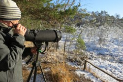 Observing and counting birds in wintry Düben Heath. Photo: Dirk Schmeller