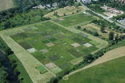 Due to its breadth, the Jena experiment proves for the first time that a loss of biodiversity has negative consequences for many individual components and processes in ecosystems. Photo: The Jena Experiment