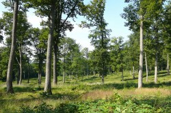150 years old oak trees in the Forêt domaniale de Bercé
