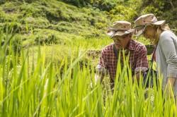 In einem der zwölf regionalen Forschungsprojekte (LEGATO) befassten sich die Forscher damit, welche Bedeutung künstlich bewässerte Reisterrassen für den Erhalt der Artenvielfalt in Südostasien haben, wie diese traditionellen Kulturlandschaften erhalten werden können und die Erfahrungsschätze für eine nachhaltige Landwirtschaft nutzen lassen. Foto: UFZ / André Künzelmann