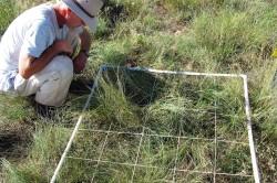 Ein Wissenschaftler ermittelt auf einer NutNet-Versuchsfläche in den USA (Boulder Colorado) die Anzahl verschiedener Arten innerhalb eines Quadratmeters. Foto: Brett Melbourne