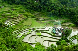 Der Ort Banga'an in der philippinischen Provinz Ifugao liegt inmitten von bewässerten Reisfeldern und ist Teil des UNESCO-Weltkulturerbes. Praxisbeispiele aus 12 Forschungsprojekten zeigen, unter welchen Bedingungen beispielsweise ökologischer Reisanbau wirtschaftlich rentabel sein kann. Foto: Josef Settele