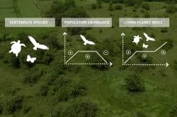 Forscher erklären Biodiversitätsvariablen (EBVs) mit dem Aktienmarkt. Foto: UFZ