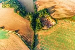 Hecken als ökologische Vorrangfläche im Eichsfeld: Biotopvernetzung für Fauna und Flora
