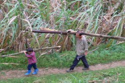 A father and son from a village in the Tianlin County (China) gather firewood from the nearby forest. Photo: Nick Hogarth, CIFOR