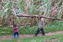 Vater und Sohn in einem chinesischen Dorf im Landkreis Tianlin (China) tragen Feuerholz aus dem angrenzenden Wald zusammen. Foto: Nick Hogarth, CIFOR