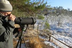 Vogelbeobachtung und -zählung in der winterlichen Dübener Heide. Foto: Dirk Schmeller