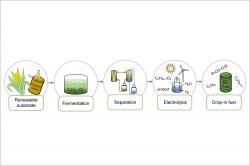 Vereinfachte Darstellung des kombinierten mikrobiellen elektrochemischen Verfahrens. Foto: UFZ / Carolin Urban und Falk Harnisch