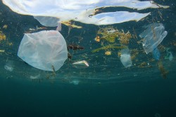 Every year, millions of tonnes of plastic debris ends up in the sea – a global environmental problem with ecological consequences. Photo: Richard Carey, fotolia