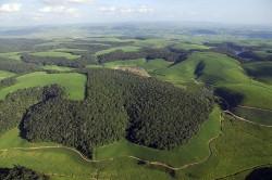Die Luftaufnahme zeigt Waldfragmente des Brasilianischen Atlantischen Regenwaldes im Nordosten Brasiliens (Mata Atlântica), umgeben von Zuckerrohrplantagen. Foto: Mateus Dantas de Paula