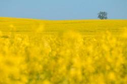 Rechtsexperten fordern ein modernes biodiversitätserhaltendes, klimaschonendes und gewässerschützendes Landwirtschaftsgesetz. Foto: UFZ / André Künzelmann