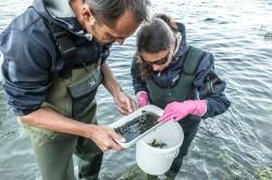 Wissenschaftlerinnen und Wissenschaftler nehmen u.a. die Gewässerbiologie unter die Lupe. Sie sind Indikatoren für die Qualität des Wassers. Foto: UFZ / André Künzelmann
