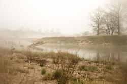 Die Mulde mit ihren angrenzenden Lebensräumen ist einem ständigen Wandel unterworfen. Diese Dynamik bestimmt den Grad der Natürlichkeit. Foto: Nele Klimmer/WWF