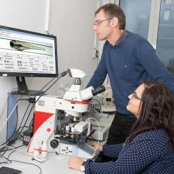 Ökotoxikologen nutzen ein VAST-System zur automatisierten Bildaufnahme von Fischembryonen. Foto: ©Bodo Tiedemann