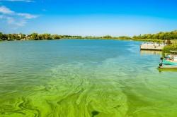 Die weiträumige Nährstoffübersättigung (Eutrophierung) von Ökosystemen ist unter anderem eine Folge der übermäßigen Freisetzung reaktiver Stickstoffverbindungen.