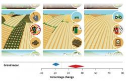 Die Intensität der Landnutzung lässt sich anhand verschiedener Indikatoren ableiten (z.B. manuelle Bearbeitung von Ackerland oder Verzicht auf Pestizide -> niedrige Intensität / Nutzung großer Maschinen und chemischem Dünger -> hohe Intensität). In den drei dominierenden Produktionssystemen (Lebensmittel, Futtermittel, Holz) erhöht die Intensivierung den Ertrag (+ 20,3%, roter Pfeil), führt jedoch auch zu einem Artenverlust (-8,9%, blauer Pfeil). Foto: UFZ