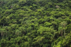 The world's tropical forests store huge quantities of carbon in their biomass and thus constitute an important carbon sink. Photo: R-M-Nunes_Shutterstock