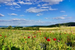 Strukturreiche Agrarlandschaft Foto: Sebastian Lakner