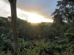 Diverse Kakao-Agroforstsysteme wie dieses Cabruca (ein traditionelles Kakaoanbausystem) in Brasilien sind von hohem Erhaltungswert für die Biodiversität. Foto: Thomas Cherico Wanger