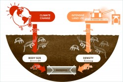 Climate change and land use reduce the biomass of soil animals. While changing climate reduces the body size of organisms, cultivation reduces their frequency. Photo: Lisa Vogel / UFZ (illustration)