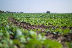 Die EU will den Einsatz von Pestiziden bis 2030 halbieren.