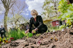 Bundesforschungsministerin Anja Karliczek vergräbt die ersten Teebeutel selbst. Foto: BMBF/Wissenschaftsjahr