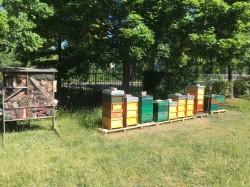 Bienenstöcke und Insektenhotel am UFZ-Leipzig