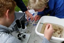 Bestimmung von Gewässerorganismen mithilfe eines Binokulars. Foto: Julia von Gönner